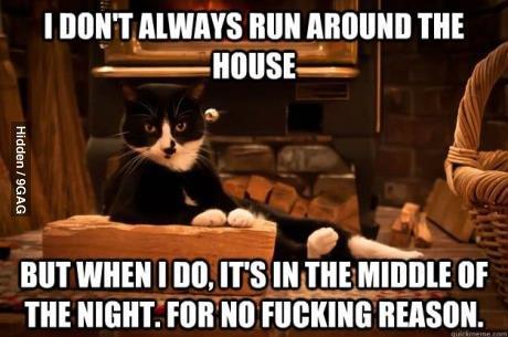 Shit Cats Say